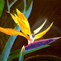 Floarea Paradisului
